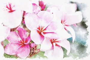 soft focus of sweet pink plumeria