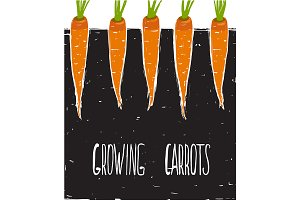 Growing Carrots Freehand Drawing