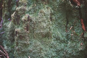 vintage moss