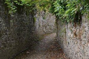 Overgrown alley