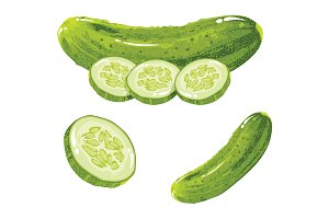 Cucumber Realistic Vector Image