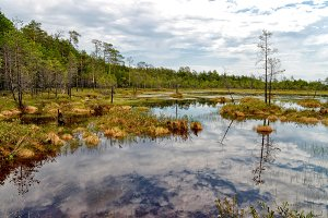Impenetrable swamp in the Siberia