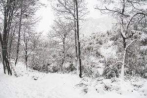 iseeyouphoto winterscene 2