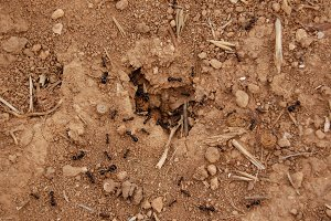 Ants Nest Ground