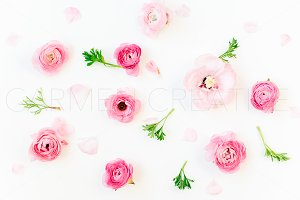 Ranunculus Mix Stock Photo No.5