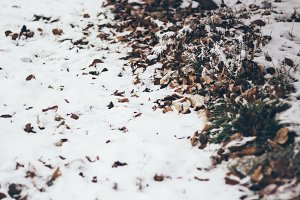 Dry leaves in the snow