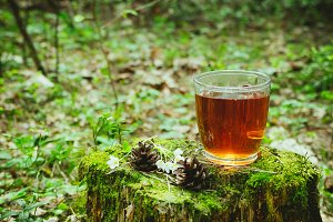 Cup of tea in the forest