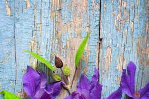 Clematis flowers on an old wooden background. Top view with copy