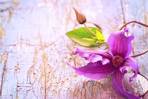 Clematis flower on an old wooden background. Vintage toning, cop