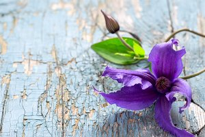 Clematis flower on an old wooden background, copy space, Selecti
