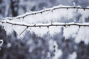 Branch with snow 2