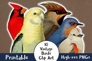 10 Vintage Birds Clip Art