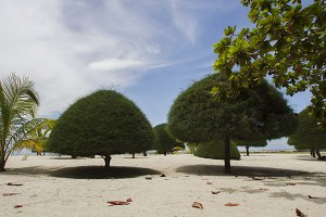 trees triangular shapes