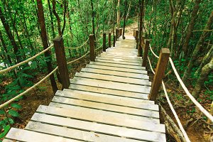 staircase made with wooden steps in jungle