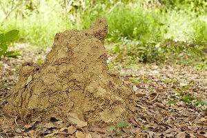 Termite in the park Thailand