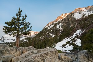 Lone pine or fir tree at sunrise in mountains