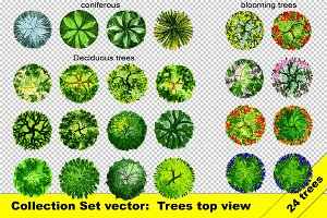 Set of top view trees vector and png