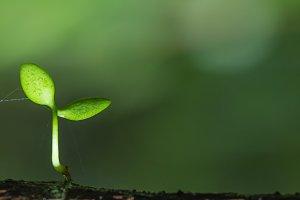 Little tree on twig