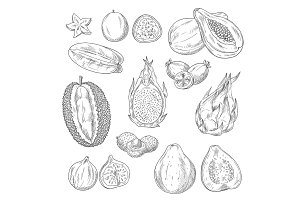 Vector sketch icons set of exotic tropical fruits
