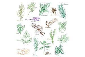 Vector icons spice seasonings or herb flavorings