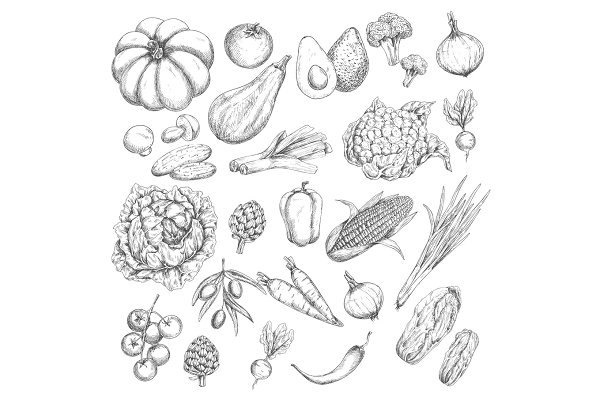Vector sketch isolated vegetables o…