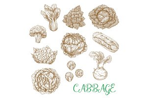 Vector sketch icons of cabbage vegetables
