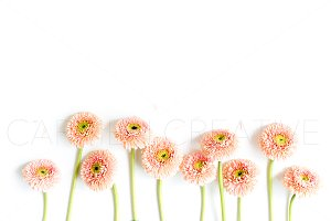 Floral Stock Photography