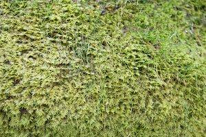 fresh moss on the ground