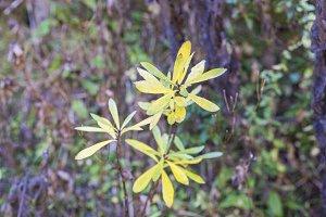 _NIK1001.Green leaves