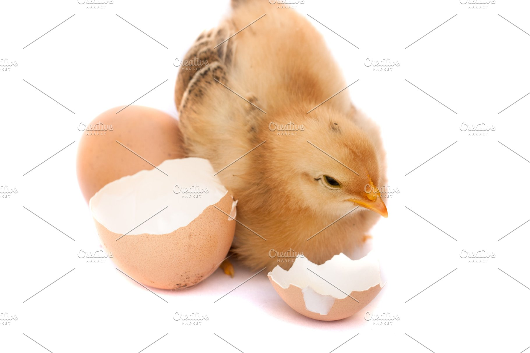Cute Little Chicken With Broken Egg Isolated On White Background