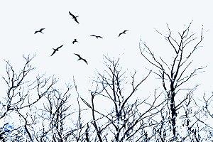 Tree and Birds Dark Scene Illustration