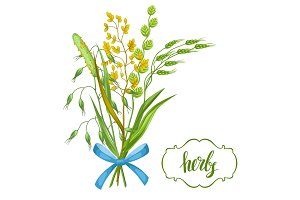 Bouquet with herbs and cereal grass. Floral design of meadow plants