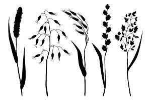 Set of herbs and cereal grass silhouettes. Floral collection with meadow plants
