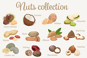 Realistic nuts & seeds. Vector