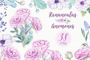 -40%OFF Ranunculus &Anemones Flowers
