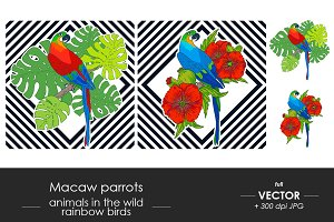 Macaw parrot illustration set