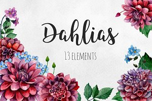Watercolor dahlias flowers clip art