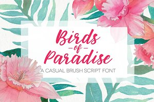 Birds of Paradise Brush Script