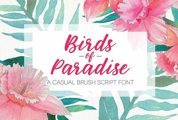 Birds of Paradise Brush Script