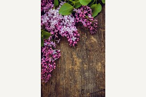 Lilac vertical background