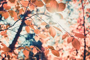 Red autumn leaves and sunlight background