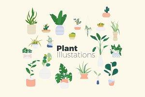 Hip Plant Illustrations