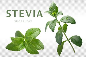Stevia (sweetleaf)