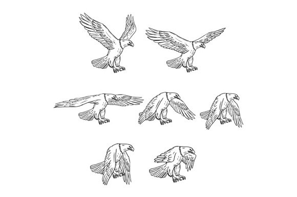 Bald Eagle Flying Drawing Collection ~ Illustrations ...