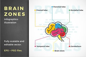 Brain Zones Infographic Illustration