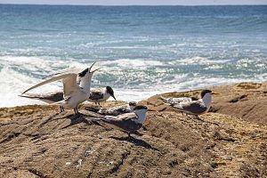 Birds squawking