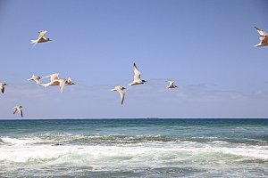 Birds flying at the beach 2