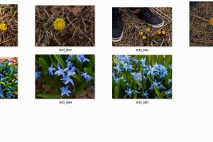 A selection of spring flowers
