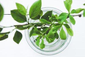 Green leaf in the jar