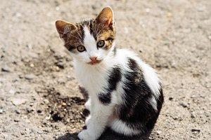 Street tricolor kitten